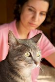 stock photo of blue tabby  - Closeup of a blue tabby cat - JPG