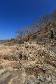 picture of drought  - Dried trees in the drought forest inside drought empty Song Long Song  - JPG