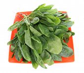 pic of sorrel  - Tuft of fresh sorrel in orange square plate isolated on white - JPG