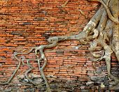 stock photo of orange-tree  - Orange Brick Wall With Ancient Root Tree