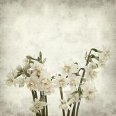 image of narcissi  - textured old paper background with doule narcissi - JPG