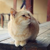 picture of tabby cat  - Pet cat looking on the right  - JPG