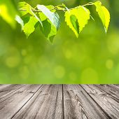 stock photo of birching  - Birch branch over an empty wooden table - JPG