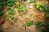 image of ivy  - Autumn background with stump leaves and ivy - JPG