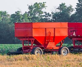 foto of wagon  - Vivid red grain wagons are parked alongside a farm soybean field at harvest time in the American Midwest - JPG
