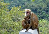 foto of baby-monkey  - monkey with baby sitting by the road - JPG