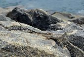 image of lizard skin  - little lizard sitting on the rock in nature detail photo - JPG