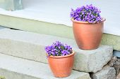 stock photo of plant pot  - Small purple flowers planted in brown ceramic pots on stone stairs - JPG