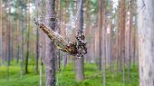 foto of dragonflies  - Big spider in forest - JPG
