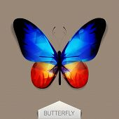 picture of blue butterfly  - vector butterfly with blue - JPG