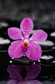picture of stone-therapy  - beautiful pink orchid with therapy stones  - JPG