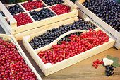 stock photo of crate  - Black And Red Currants Berries Harvest In The Wood Crate And Red Curant Bush In The Summer Garden Background - JPG