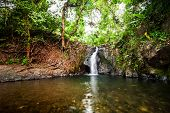 foto of rainforest  - Tropical rainforest landscape with jungle plants and flowing water of small waterfall - JPG