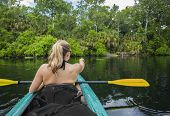 stock photo of alligator  - Woman kayaker pointing at an alligator in the water while on a kayaking trip down a beautiful tropical river - JPG