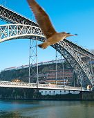 stock photo of dom  - Flying seagull and Dom Luis I Bridge in Porto Portugal - JPG