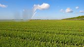 stock photo of cannon  - Water cannon irrigating a field with tulips in spring - JPG