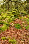 image of contortion  - Stock image of pathways through old twisted gnarly trees and moss covered rocks - JPG