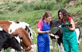 stock photo of veterinary  - Veterinary on a farm performing a physical examination in a cow - JPG