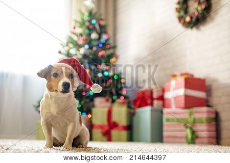 Merry Christmas Dog Jack Russell