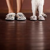 Woman and a cat in slippers. Family at home. Domestic life with pet poster