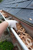 stock photo of downspouts  - Closeup of a hand cleaning gutters filled with maple seeds - JPG