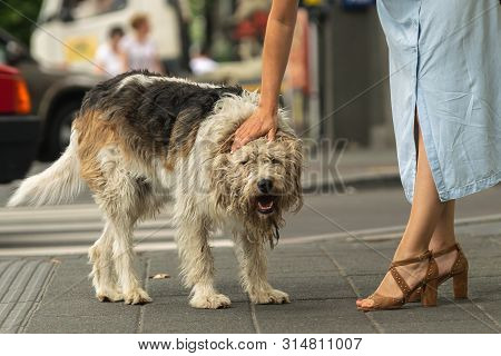 poster of Woman Cuddling Stray Dog On The Street Attractive Woman Cuddling Dog On Street. Close Up Of Stray Do