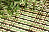 image of origanum majorana  - Fresh marjoram herb on a bamboo background a horizontal picture - JPG