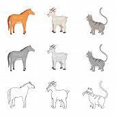 Isolated Object Of Breeding And Kitchen Icon. Collection Of Breeding And Organic Stock Symbol For We poster