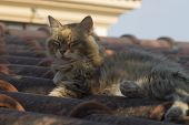 Fluffy Tabby Cat With Long Whiskers Dozing On A Brown Tiled Rooftop In The Soft Sunlight poster