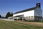 stock photo of dairy barn  - Clean and neat central Wisconsin dairy cattle at feeding time - JPG