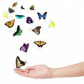 Постер, плакат: Рука и бабочек