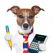 stock photo of working-dogs  - accountant dog with pencil and  a calculator - JPG