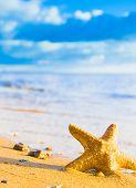 pic of starlet  - Under the Sun Sea Starlet - JPG
