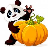 image of panda  - Cute little panda holding giant pumpkin - JPG