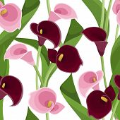 stock photo of calla  - Vector seamless pattern with pink and purple calla lilies and green leaves on a white background - JPG