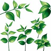 stock photo of green leaves  - Set of different branches with green leaves editable vector illustration - JPG