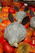 picture of fancy mouse  - Fancy decoration of a pumkin show box - JPG