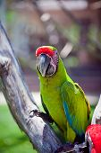 stock photo of cockatoos  - The  bird parrot cockatoo sitting on branch - JPG