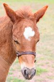image of colt  - Beautiful six week old colt in the pasture