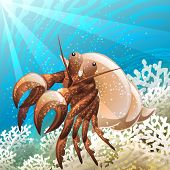 foto of hermit  - Illustration with hermit crab in coral reef against seabed background drawn in cartoon style - JPG