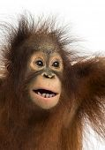 Close-up of a young Bornean orangutan, mouth opened, Pongo pygmaeus, 18 months old, isolated on whit