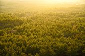 Prospect  Of Yellow Forest With Backlight In Jeju Island