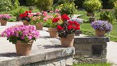 Geranium And Flower Garden Built On Terrace