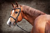 image of horses ass  - Russian Don horse portrait on grunge background - JPG