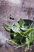 stock photo of sorrel  - Fresh organic sorrel on table. Selective focus vertical. ** Note: Shallow depth of field - JPG