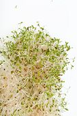 pic of soybean sprouts  - The healthy diet - JPG