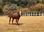 Picture of large strong brown colt horse in hd.
