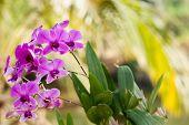 stock photo of orquidea  - Purple orchid flower - JPG