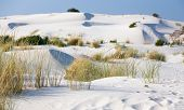 pic of dune grass  - Grass growing out of the sand dunes on the background - JPG