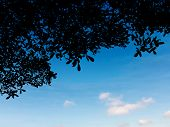 picture of climber plant  - silhouette leaves plant over blue sky for background - JPG